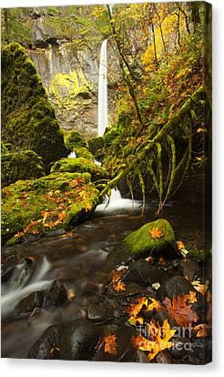 Elowah Autumn Canvas Print by Mike  Dawson