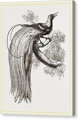 Emerald Bird Of Paradise Canvas Print