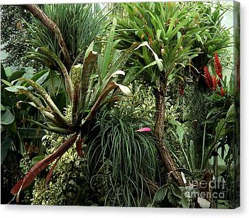 Epiphytic Bromelia Canvas Print by Vaughan Fleming