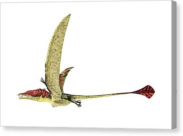 Eudimorphodon Canvas Print by Leonello Calvetti