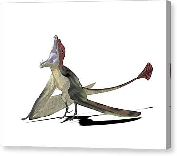 Eudimorphodon Pterosaur Canvas Print by Friedrich Saurer
