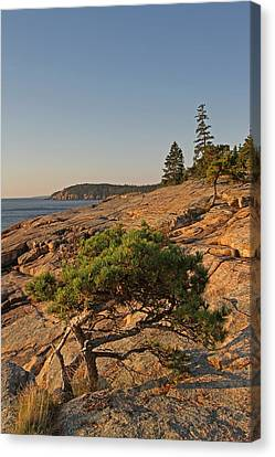 Evergreen Canvas Print by Juergen Roth
