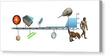 Evolution Of Earth Timeline Canvas Print by Mikkel Juul Jensen