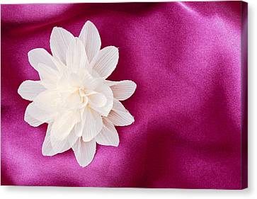 Fabric Flower Canvas Print by Tom Gowanlock