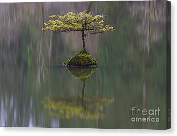 Fairy Lake Fir Canvas Print