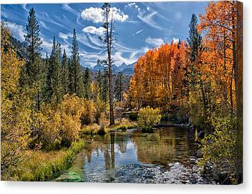 Fall At Bishop Creek Canvas Print by Cat Connor