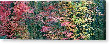 Fall Colors At Fourth Of July Canyon Canvas Print by Panoramic Images