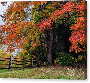 Fall Maple Canvas Print by Anthony Heflin