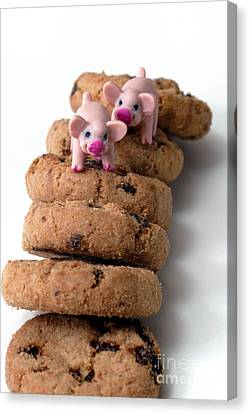 Fat Pigs 2 Canvas Print by Amy Cicconi