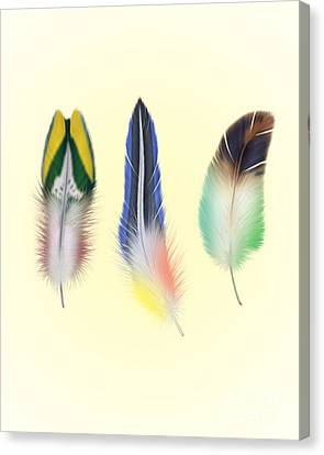 Feathers Canvas Print - Feathers by Mark Ashkenazi