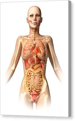 Female Body With Bone Skeleton Canvas Print by Leonello Calvetti