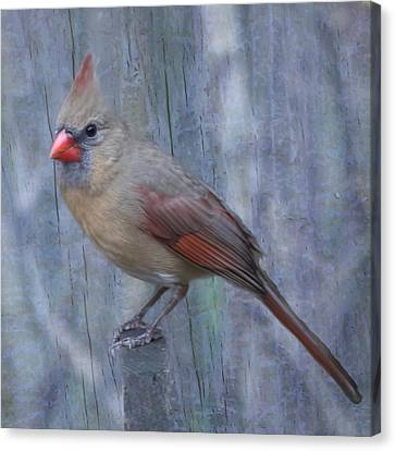 Female Cardinal Canvas Print by John Kunze