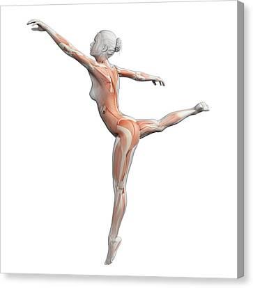 Ballet Dancers Canvas Print - Female Dancer by Sebastian Kaulitzki