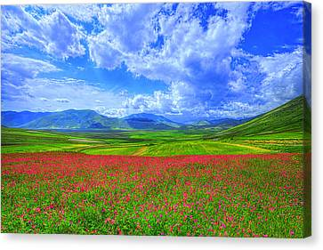 Fields Of Dreams Canvas Print by Midori Chan