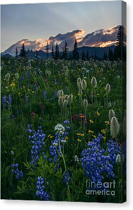 Crepuscular Rays Canvas Print - Fields Of Paradise by Mike Dawson