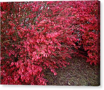 Canvas Print featuring the photograph Fire Bush by Pete Trenholm