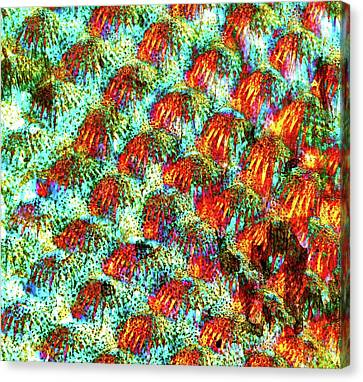 Fish Scales Canvas Print by Dr Keith Wheeler