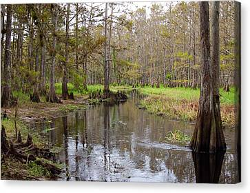 Fisheating Creek Canvas Print by Rich Leighton