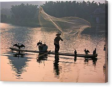 Fisherman Fishing With Cormorants Canvas Print