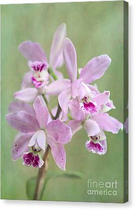 Canvas Print - Five Beautiful Pink Orchids by Sabrina L Ryan