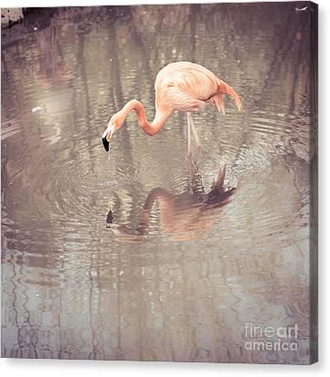 Flamingo Canvas Print by Hannes Cmarits