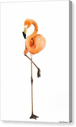 Flamingo On White Canvas Print