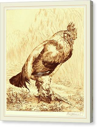 Félix Bracquemond French, 1833-1914, The Old Cock Canvas Print by Litz Collection