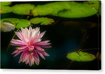 Floating Canvas Print by Ken Beatty