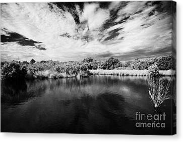 Flooded Grasslands And Mangrove Forest In The Florida Everglades Usa Canvas Print