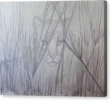 Florida Panther - Watching Canvas Print by PJ Jackson