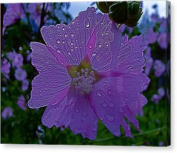 Flower After Rain Canvas Print