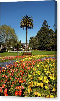 Flower Gardens And Palm Tree, Seymour Canvas Print by David Wall