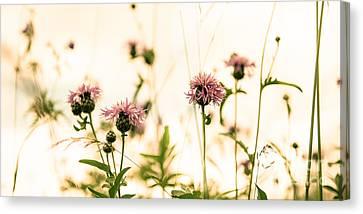 Flower Meadow Canvas Print by Hannes Cmarits