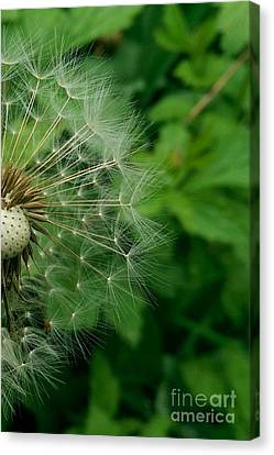 Flower Canvas Print by Olivia Narius