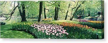 Flowers In A Garden, Keukenhof Gardens Canvas Print