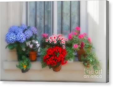 Blue Begonia Canvas Print - Flowers On A Windowsill In Paris by Louise Heusinkveld