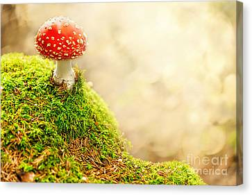 Fly Agaric Canvas Print by Stefan Holm