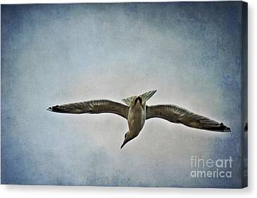 Flying Canvas Print by Angela Doelling AD DESIGN Photo and PhotoArt