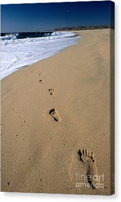 Footprints On The Beach Canvas Print by William H. Mullins