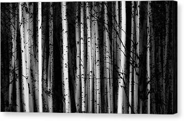 Forest Of Birch Trees  Alberta, Canada Canvas Print by Ron Harris