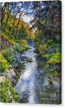 Forest Stream Canvas Print by Ian Mitchell