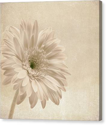 Forever More Canvas Print by Kim Hojnacki