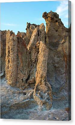 Pyrite Canvas Print - Fossil Tree Stumps by David Parker