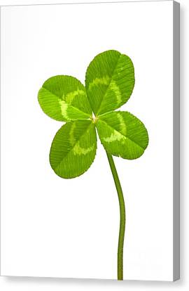 Four-leaf Clover Canvas Print by David Nunuk