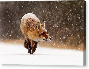 Fox First Snow Canvas Print by Roeselien Raimond