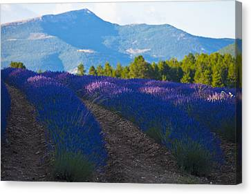 Simple Beauty In Colors Canvas Print - France, Southern France by Carlos Sanchez Pereyra