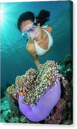 Free Diver With Anemonefish Canvas Print by Scubazoo