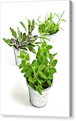 Fresh Herbs In Pots Canvas Print by Elena Elisseeva