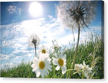 Fresh Meadow Background Canvas Print by Michal Bednarek