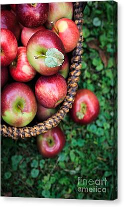 Fresh Picked Apples Canvas Print by Edward Fielding